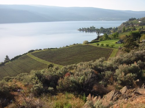 Cedar Creek Vineyard, Summerland BC May 24, 2002 by Hanson R. Hosein
