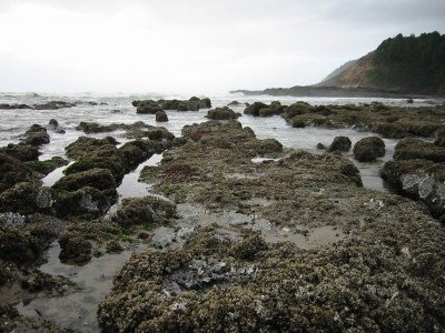 Yachats, OR tidepools, Heather Hughes